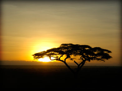 Tanzania sunset during safari- Serena