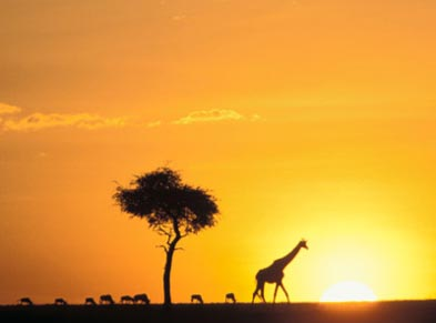 Safari in Kenya – capture the sights of Kenya
