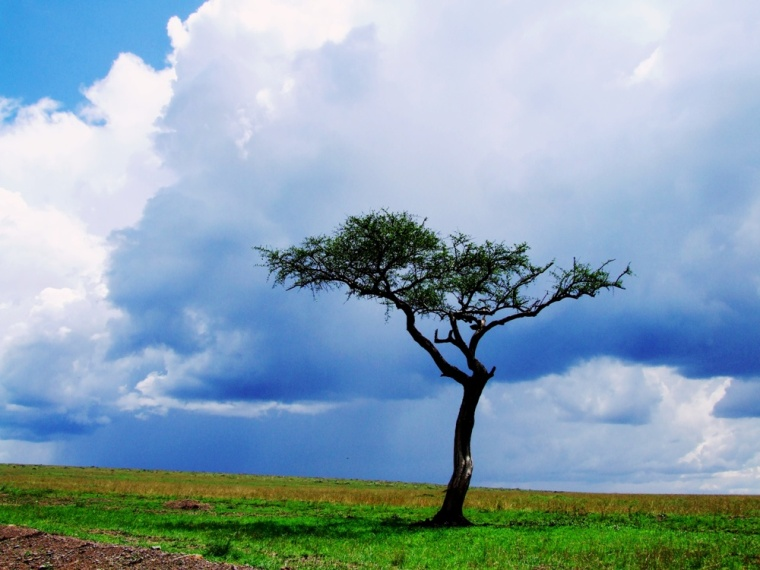 The rain moves in Masai Mara