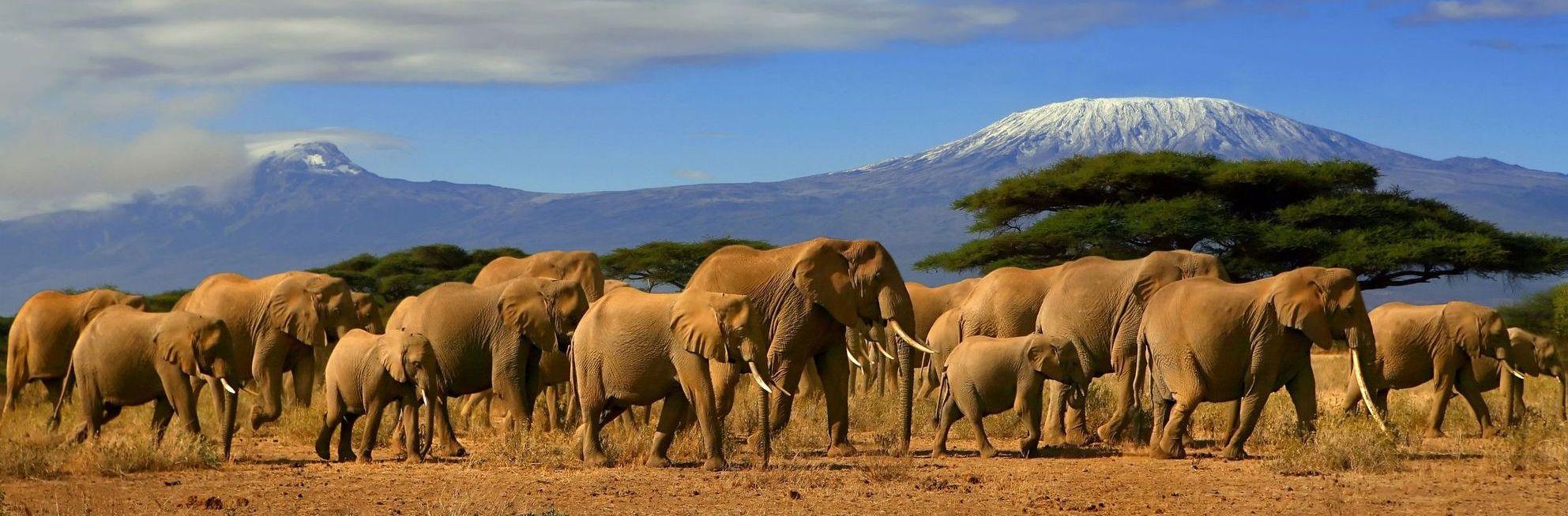africa safari travel: