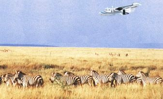 Flying safari