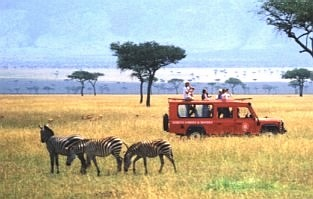 Safari in Masai Mara - Serena