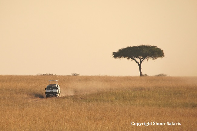 shoor safaris reviews